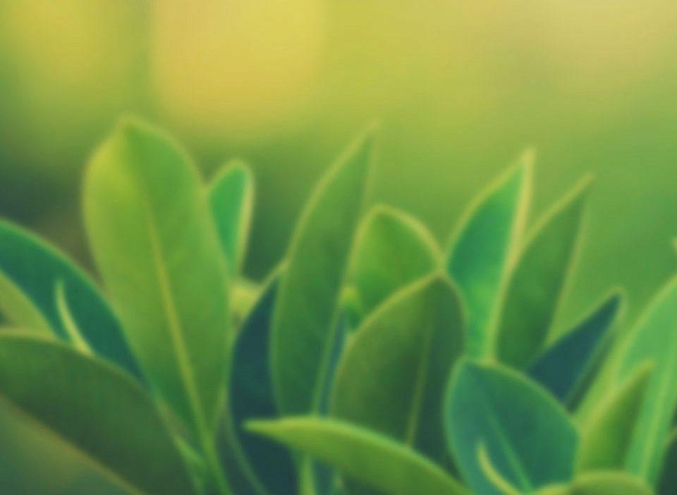 prolaktin-hormonuna-karşı-faydalı-bitkiler
