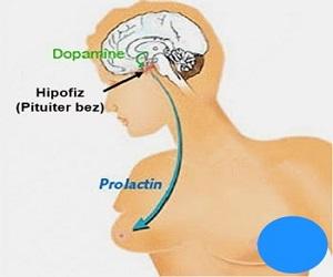 prolaktin-hormonuna-faydalı-bitkiler