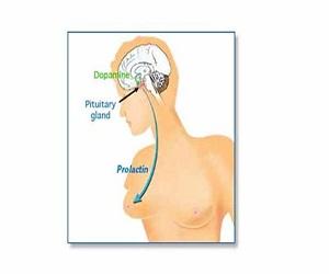 prolaktin-hormonu-için-bitkisel-çözümler